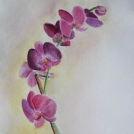 Studie orchideje