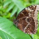 Výstava motýlů ve Fata Morganě
