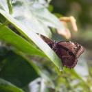 Fotografie motýlů