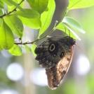 Výstava exotických motýlů Praha