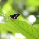 Motýl v botanické zahradě