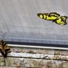 Motýli ve skleníku