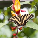 Exotický motýl