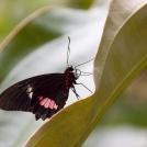 Motýl z botanické zahrady Praha