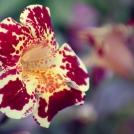 Makro snímek z botanické zahrady.