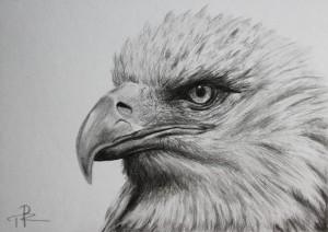 Kresba orla obyčejnou tužkou, realistická kresba orla