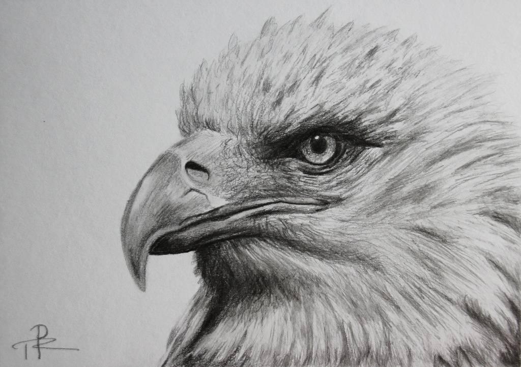 Malba A Kresba Orla Realisticka Kresba Tuzkou A Pokracovani