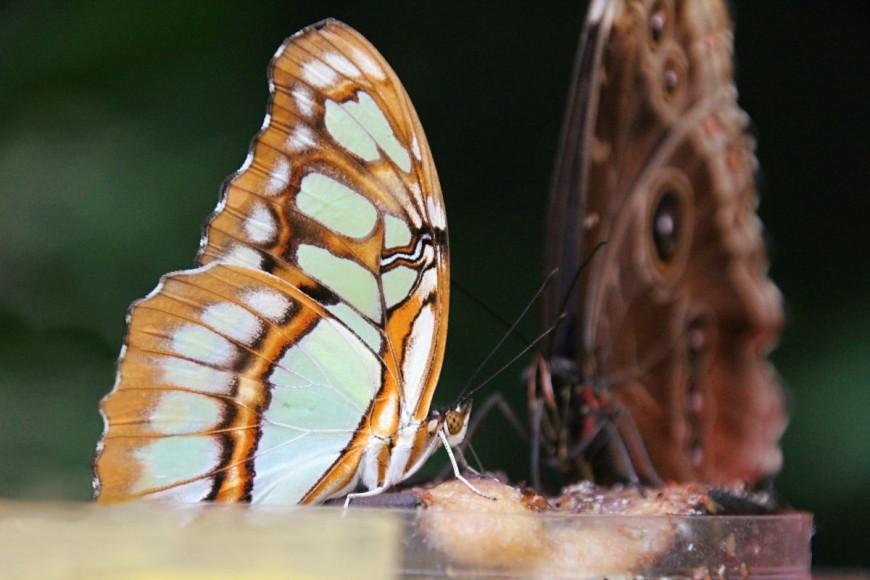 Motýli ve Fata Morganě - umělecké fotografie motýlů, Tereza Preislerová