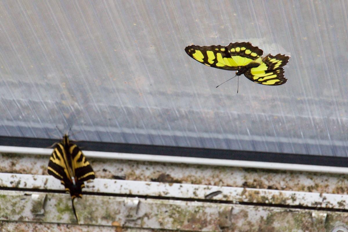 Fotografie Exotickych Motylu Ze Skleniku Fata Morgana V Praze