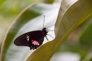 Tropický motýl na listě - výstava exotických motýlů Praha